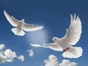 dove-releases